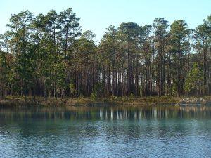 800px-Apalachicola_pond