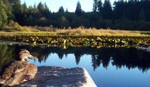Duck Lake Fishing Location